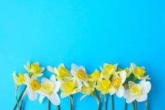 Composizione minimalistic tenera nei fiori della molla sulla superficie di struttura Bella decorazione femminile della pianta per Immagini Stock Libere da Diritti