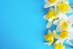 Composizione minimalistic tenera nei fiori della molla sulla superficie di struttura Bella decorazione femminile della pianta per Fotografia Stock Libera da Diritti