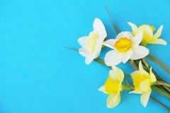 Composizione minimalistic tenera nei fiori della molla sulla superficie di struttura Bella decorazione femminile della pianta per Fotografie Stock