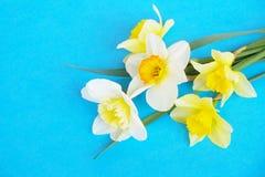 Composizione minimalistic tenera nei fiori della molla sulla superficie di struttura Bella decorazione femminile della pianta per Immagine Stock Libera da Diritti