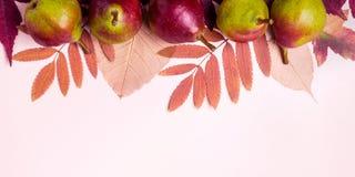 Composizione naturale delle foglie e delle pere asciutte di rosa su fondo rosa Concetto della raccolta di autunno fotografia stock libera da diritti