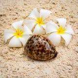 Composizione nei fiori e nella conchiglia Fotografia Stock