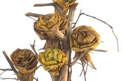 Composizione nei fogli di autunno Fotografia Stock