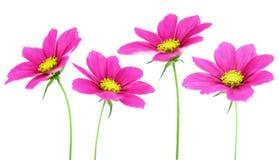 Composizione nel fiore Immagine Stock