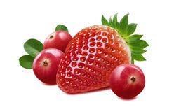 Composizione nel mirtillo rosso e nella fragola isolata su backgroun bianco Immagini Stock Libere da Diritti