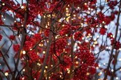 Composizione nel nuovo anno fatta dei rami d'argento, dei rami dell'abete e delle bacche rosse Tema di nuovo anno Fotografia Stock