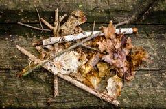 Composizione nella foresta fotografia stock