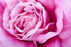 Composizione nella Rosa Fotografia Stock