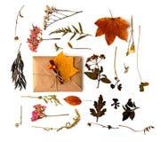 Composizione piana in disposizione con le foglie fotografia stock libera da diritti