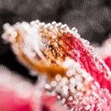 Composizione subacquea astratta con i petali confusi dell'orchidea Immagini Stock