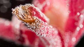Composizione subacquea astratta con i petali confusi e le bolle dell'orchidea Fotografie Stock