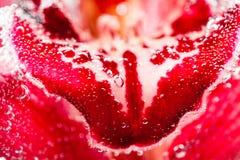Composizione subacquea astratta con i petali confusi e le bolle dell'orchidea Fotografia Stock