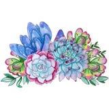 Composizione succulente dipinta a mano nella pianta dell'acquerello illustrazione di stock