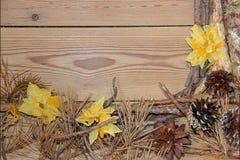 Composizione sui bordi di legno del fondo fatti dei rami, ago Immagini Stock Libere da Diritti
