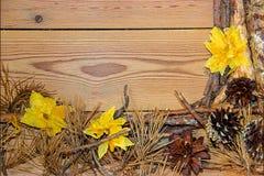 Composizione sui bordi di legno del fondo fatti dei rami, ago Immagine Stock