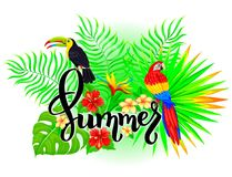 Composizione tropicale luminosa in estate Fotografie Stock Libere da Diritti