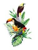 Composizione tropicale negli uccelli Fotografia Stock