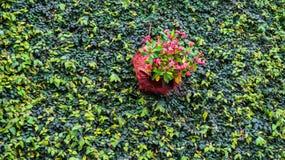 Composizione verde nella pianta della parete Immagini Stock Libere da Diritti