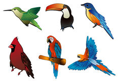 Composizione in vettore degli uccelli Fotografia Stock