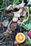 Compost Royalty Free Stock Images