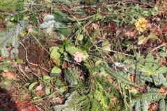 compost stock afbeeldingen