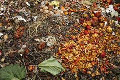 Compost bin in the garden Royalty Free Stock Photography