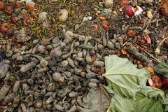 Compost bin in the garden Royalty Free Stock Photos