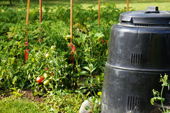 Compost bin and vegetable garden. Compost bin made of recycled plastic next to beautiful vegetable garden with ripe tomatoes. Recycling, green, concept Stock Photos