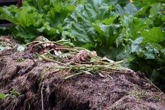 Compost de jardin Photo libre de droits