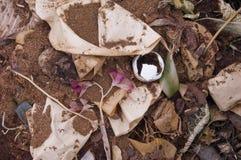 Compost domestique Photographie stock