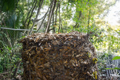 Compost Heap in Chicken wire Enclosure. Compost heap consisting of live oak leaves in a chicken wire enclosure outdoors. Recycling at work royalty free stock photo