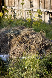 Compost Stock Image