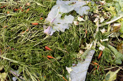A compost heap with plant remains. Royalty Free Stock Photo