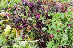 A compost heap with plant remains. Stock Photos
