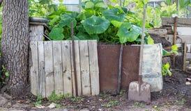 Pumpkin plants. Compost heap with pumpkin plants stock photos