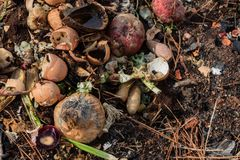 Compost heap with a variety of food scraps and organic matter. Horizontal aspect Stock Photos