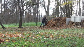 Compost leaf wheelbarrow stock video