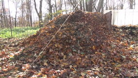 Compost leaves heaps stock footage