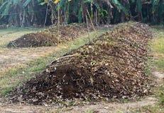 Compost, organische natuurlijke bladeren. royalty-vrije stock foto's