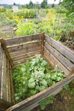 Compost Pile. In a vegetable garden with borage Stock Photography