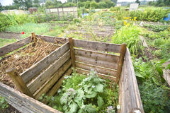 Compost Pile. In a vegetable garden with borage Stock Images