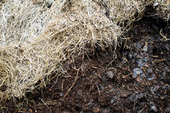 Compost soil, Organic plant fertilizer Royalty Free Stock Photos