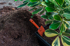 Compost soil. Organic plant fertilizer and gardening Tools Stock Photography
