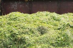 Compostbakken Royalty-vrije Stock Afbeeldingen
