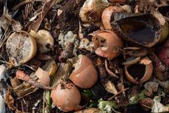 Compostez le tas avec le fruit de décomposition, le légume, et les chutes de coquille d'oeuf Images stock
