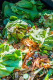composting Fotos de Stock