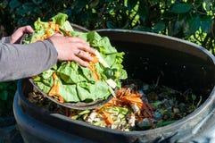 composting Arkivbild