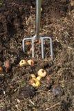 composting fotografia stock