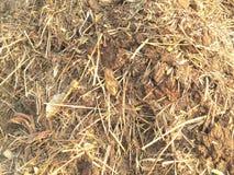 Composting för gödsel royaltyfri foto