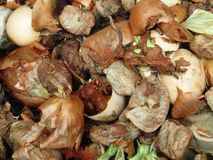 Composting vegetable matter. royalty free stock image